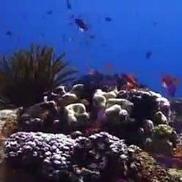 Free Stock Footage Fish 2