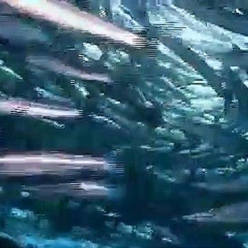 Free Stock Footage Fish 4
