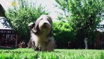 The Adorable Reason Your Dog Puts Its Paw on You