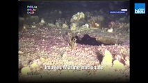 La pollution du Tanio filmée par la Marine nationale