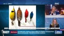 Objectif Terre : Des animaux s'adaptent au changement climatique - 06/12