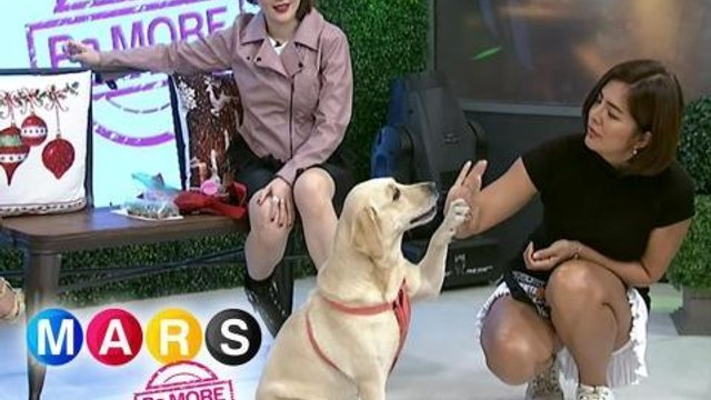 Mars Pa More: Alice Dixson's tips on training your dogs easily