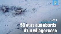 Un village russe cerné par les ours polaires