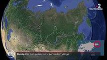 Russie : des ours polaires aux portes d'un village