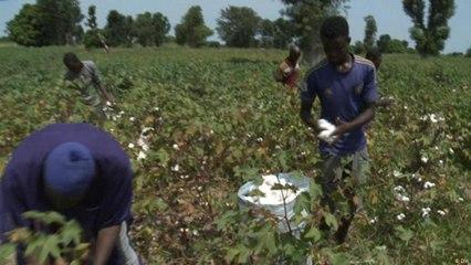 مالي: عمدة يحاول الحد من انتشار التصحر