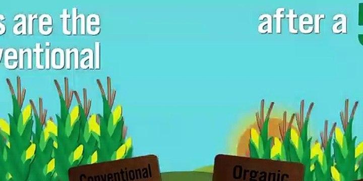 Benedict T. Palen, Jr - Organic vs Conventional