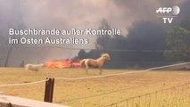Buschbrände in Australien weiter außer Kontrolle