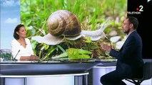 Traditions culinaires : l'histoire des escargots de Bourgogne