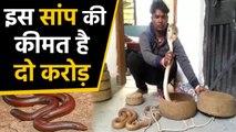 2 crore के इस snake के साथ 8 smugglers गिरफ्तार | वनइंडिया हिंदी
