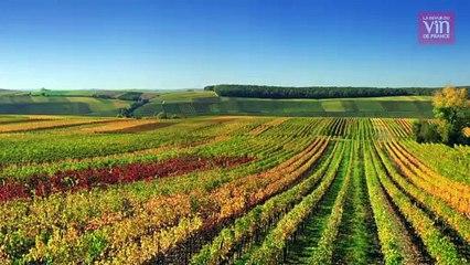 """""""Le travail sur les sols peut compenser les effets du réchauffement climatique"""""""