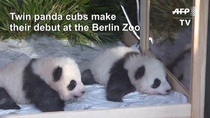 Boy oh boy! Twin male pandas charm Berlin zoo