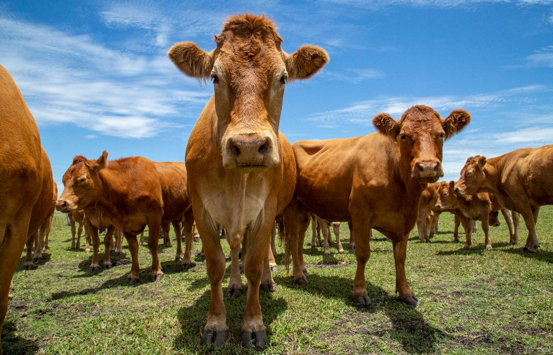 The Cattle at This Zen California Ranch Basically Run the Joint