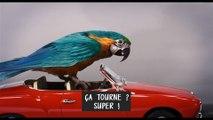 Le Voyage du Dr Dolittle Film - Auditions avec  Robert Downey Jr. et les animaux