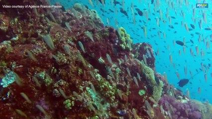 Marine life under threat from plummeting oxygen levels