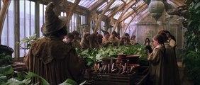 Harry Potter et la Chambre des Secrets : scène des Mandragores