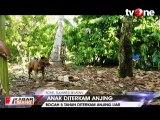Bocah di Bone dan Gorontalo Diterkam Anjing Liar
