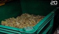 L214 diffuse des images de canetons jetés vivants à la poubelle