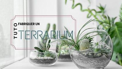 Comment fabriquer un terrarium ?