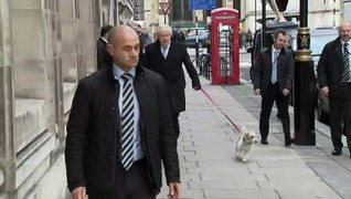 Boris Johnson casts his vote with his dog Dilyn