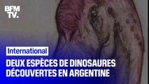 Deux nouvelles espèces de dinosaures ont été découvertes en Argentine