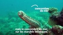 Concombres de mer, éléphants, girafes... quelles avancées pour la protection d'espèces menacées ?