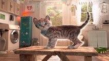 Kids Learn Colors, Puzzles, Pet Costumes - Fun Pet Animals Care Games - Little Kitten Adventure