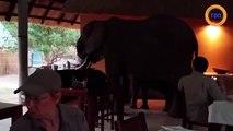 Des éléphants s'incrustent au petit-déjeuner d'un hôtel