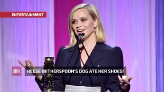 Reese Witherspoon's Dog