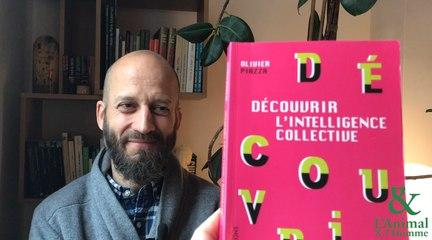 Interview 4 d'Olivier Piazza : Les fourmis, les pros du boulot !