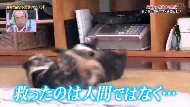 天才!志村どうぶつ園動物と話せるハイジSPナゼ-相撲を見ると大興奮する犬 - 19.12.14-(edit 2/2)