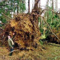 Il y a 20 ans, la tempête du siècle s'abattait sur le Limousin