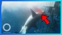 大白鯊卡住鐵籠 25 分鐘活活夾死