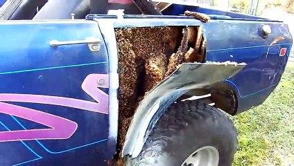 Il découvre une ruche dans son pick-up