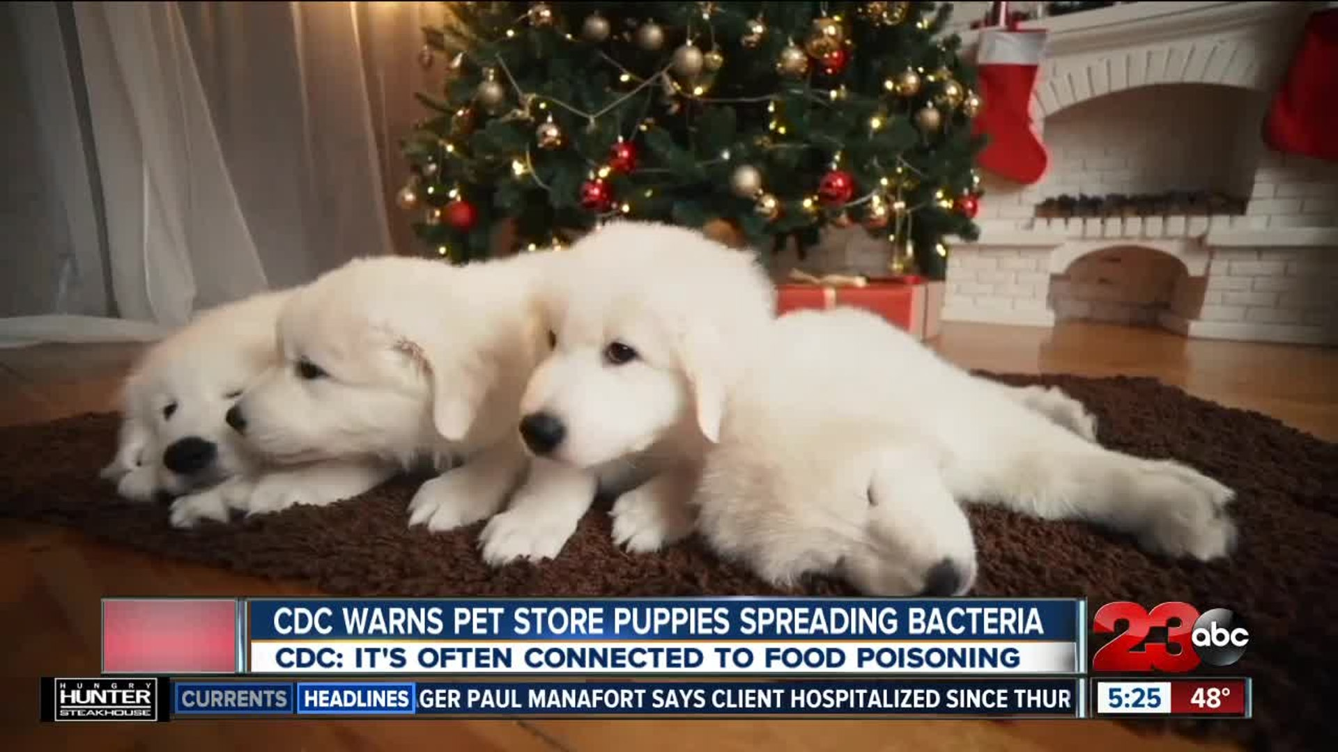 CDC warns pet store puppies spreading bacteria
