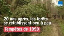 Tempêtes de 1999 - 20 ans après, les forêts de rétablissent peu à peu
