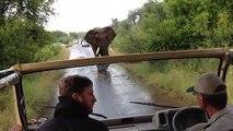 Obligé de faire marche arrière face à un éléphant en colère