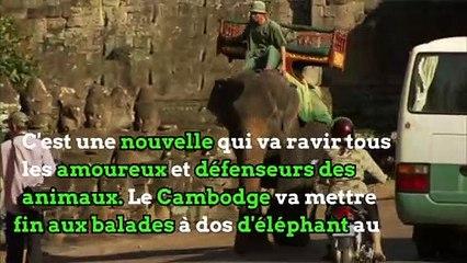 Le Cambodge interdit les balades à dos d'éléphant à Angkor Wat