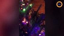 Elle découvre un vrai hibou qui vit dans son sapin de Noël