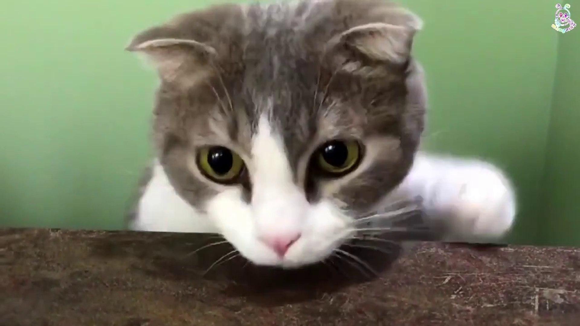 BLACKPINK Lalisa's LEO has such HUGE ROUND GOLDEN eyes!