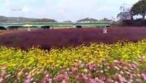 [UHD 다큐 풍경] 노랗게 물든 자연 친화 도시…장성
