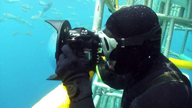 Sharks Documentary Trailer