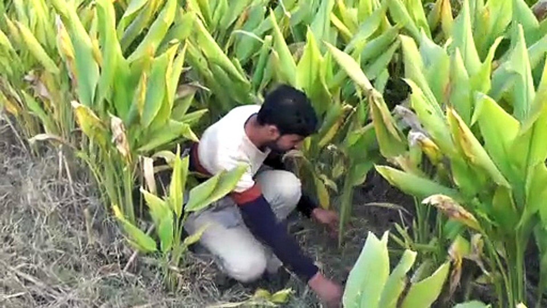 Haldi Vlogs in Village
