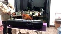 Cette poule joue du piano avec son bec !