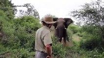 Il stoppe un éléphant d'une façon incroyable