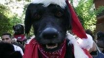El Negro Matapacos, un perro ícono de resistencia social en Chile