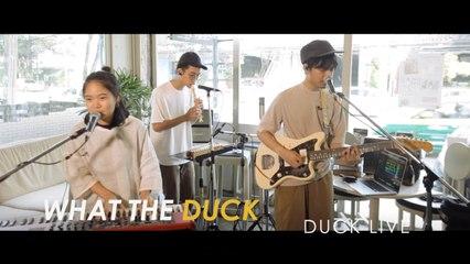 Plastic Plastic - Duck Live 71 - ฮัม (Hum) - Plastic Plastic