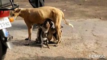 MOTHER IS MOTHER