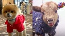 Pourquoi il ne faut pas faire porter d'habits à son animal   Le Speech d'Hélène Gateau, vétérinaire