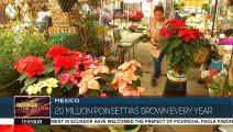 Mexico Paints Christmas Red With Poinsettia Flowers