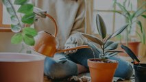 How to Water Houseplants (And How to Know if You're Overwatering)